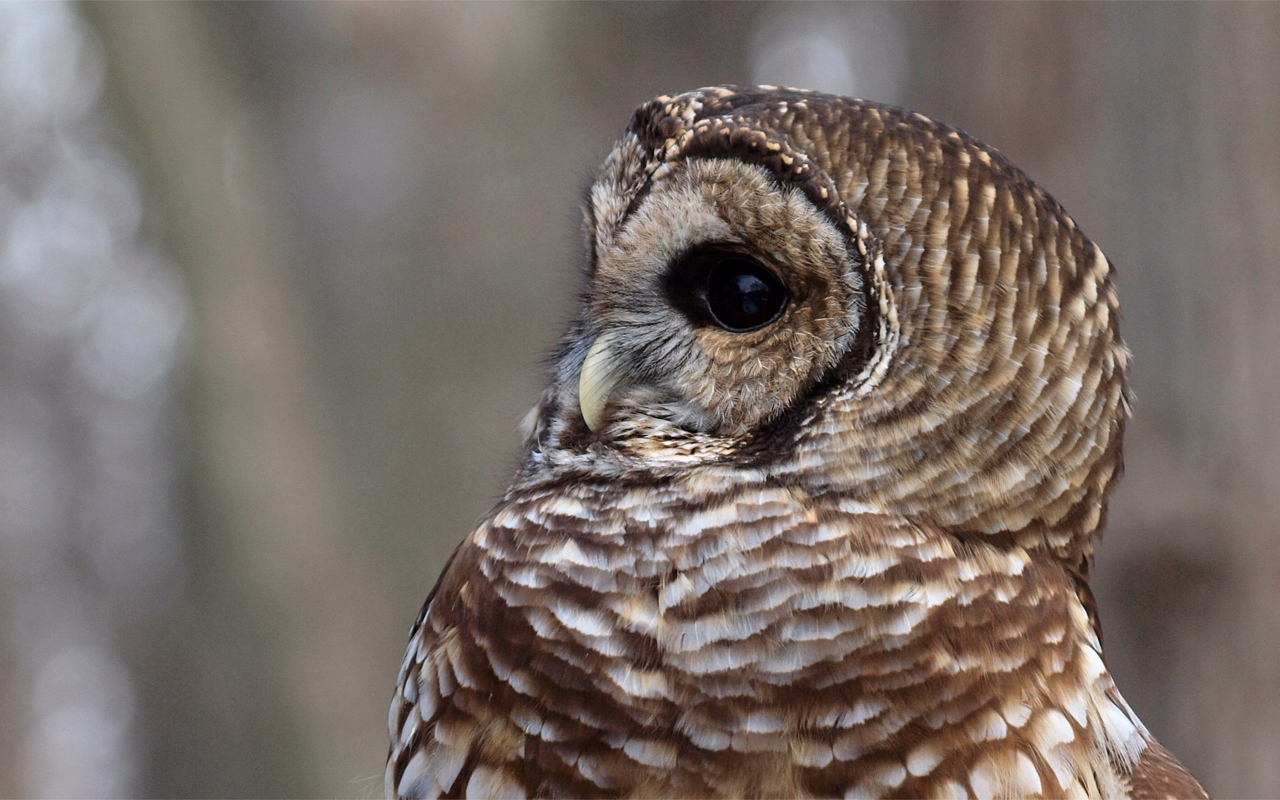 Owl Bird Profile HD Wallpaper