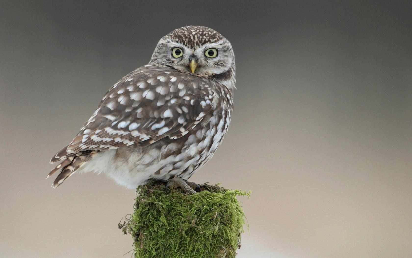 Owl Bird Tree Stump Moss