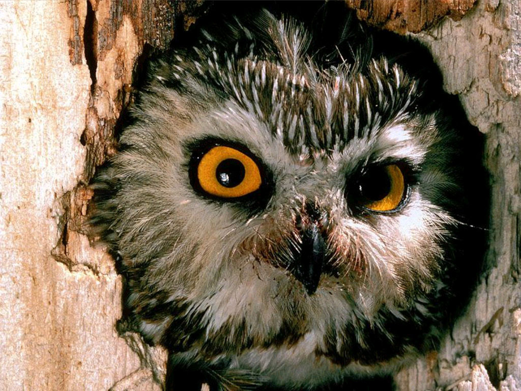 Owl in tree hole