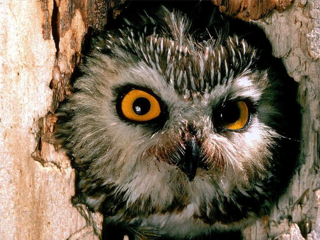 Owl hole!