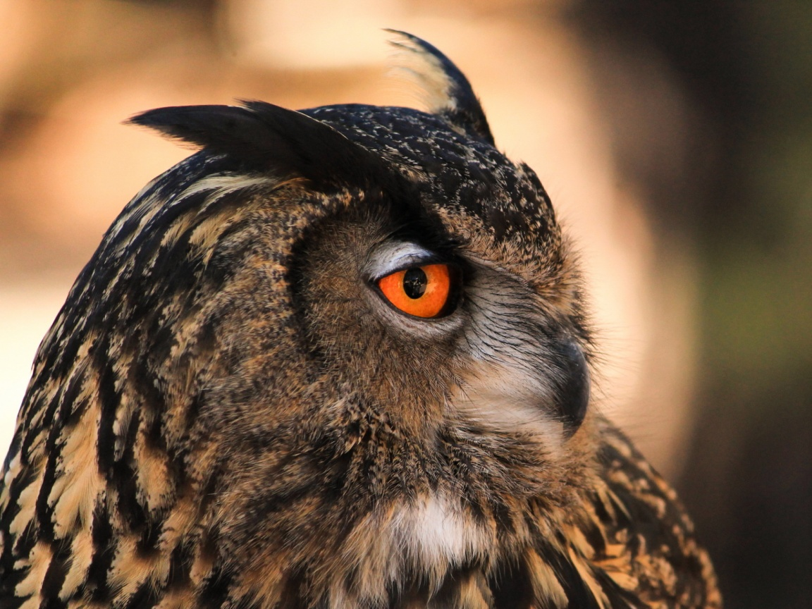 Owl orange eyes