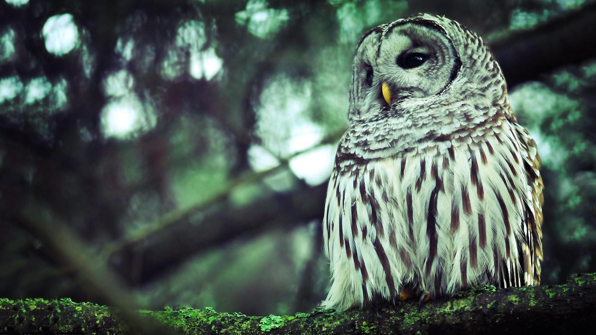 Owl wallpaper 1920x1080 58865