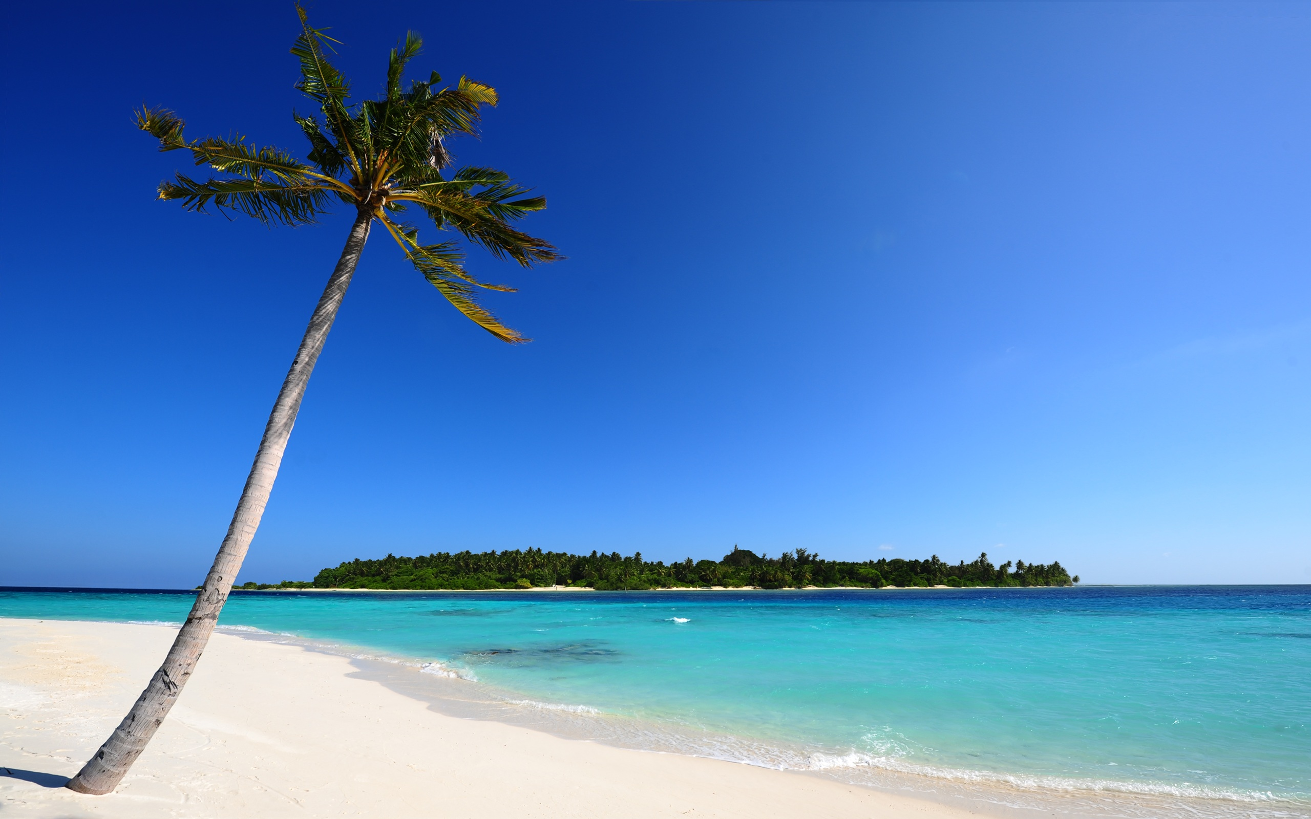 palm-tree-beach-island-blue-ocean-sand_095462.jpg