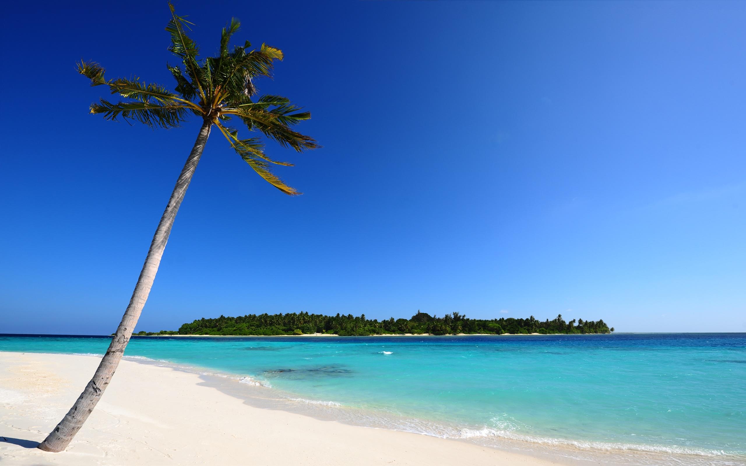 palm-tree-beach-island-blue-ocean-sand_095462.jpg