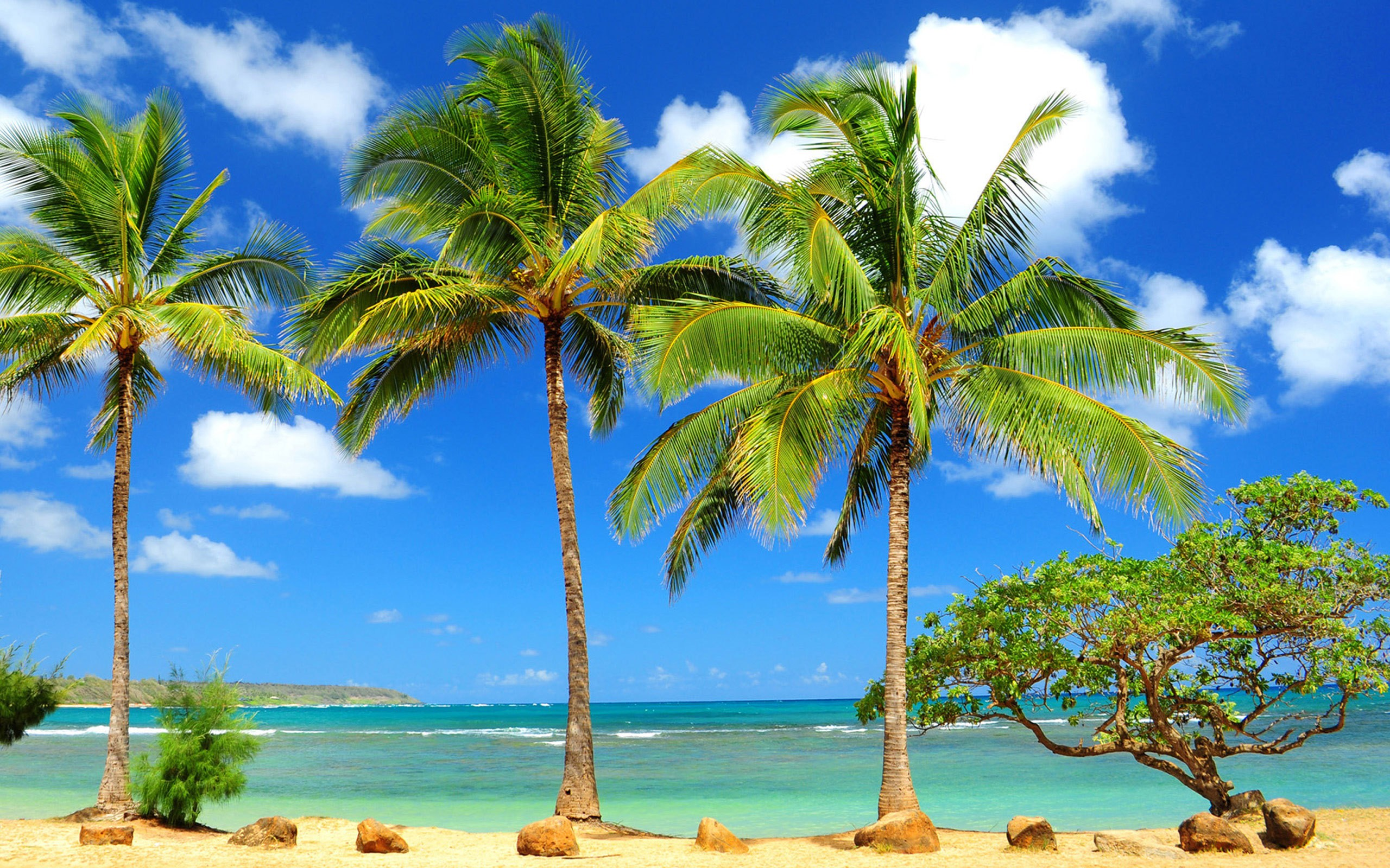Beach Palm Tree Wide Wallpapers