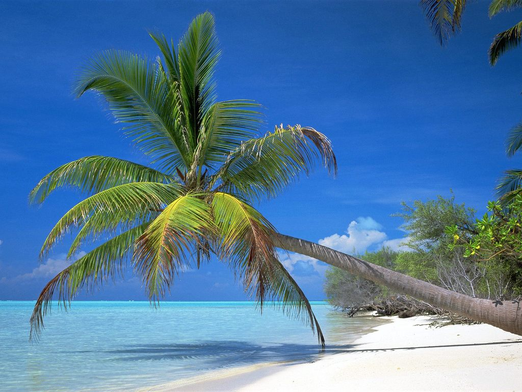 Palm Tree Wallpaper HD Desktop Wallpapers