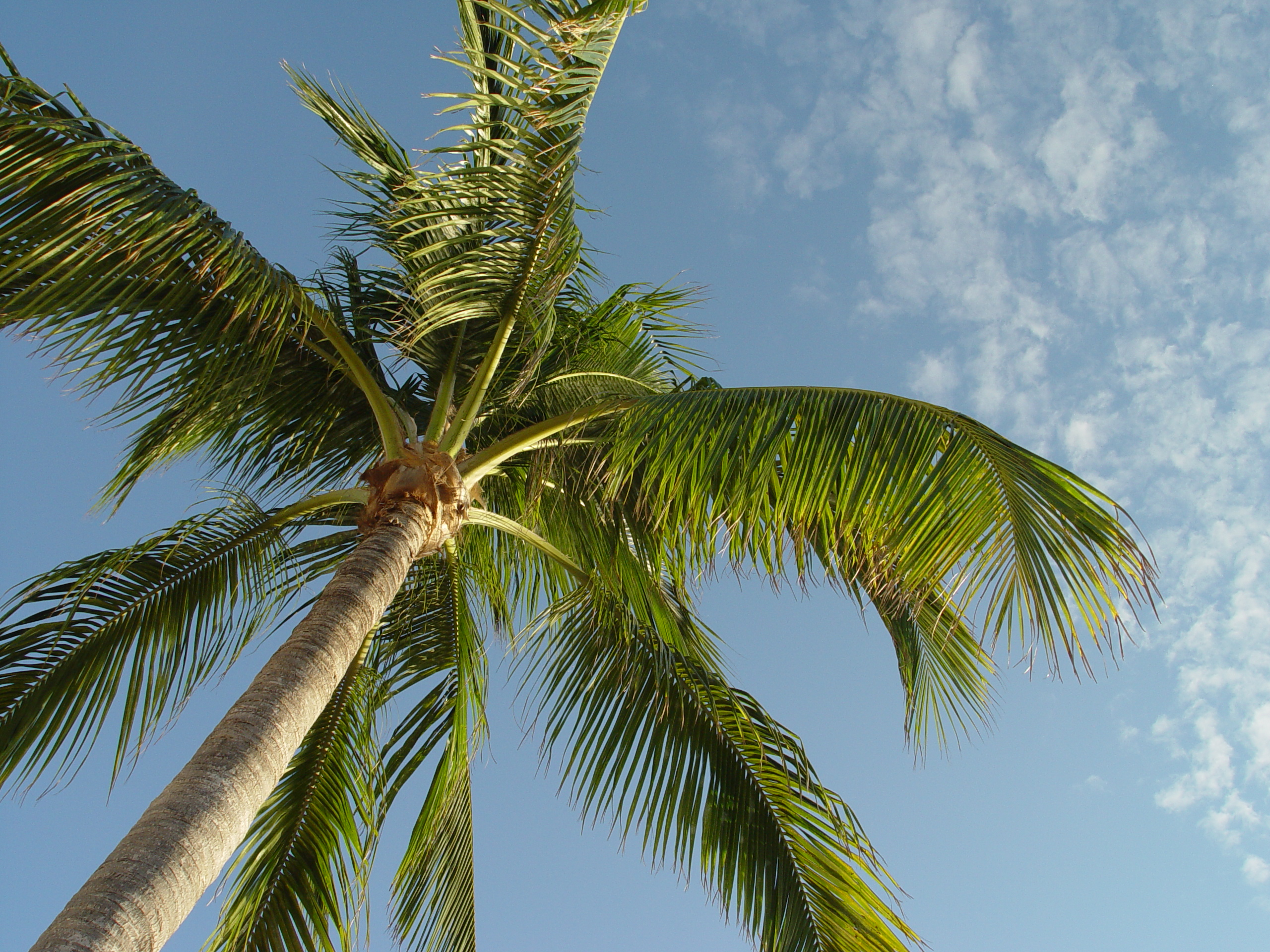 File:Under the palm tree (5889915132).jpg