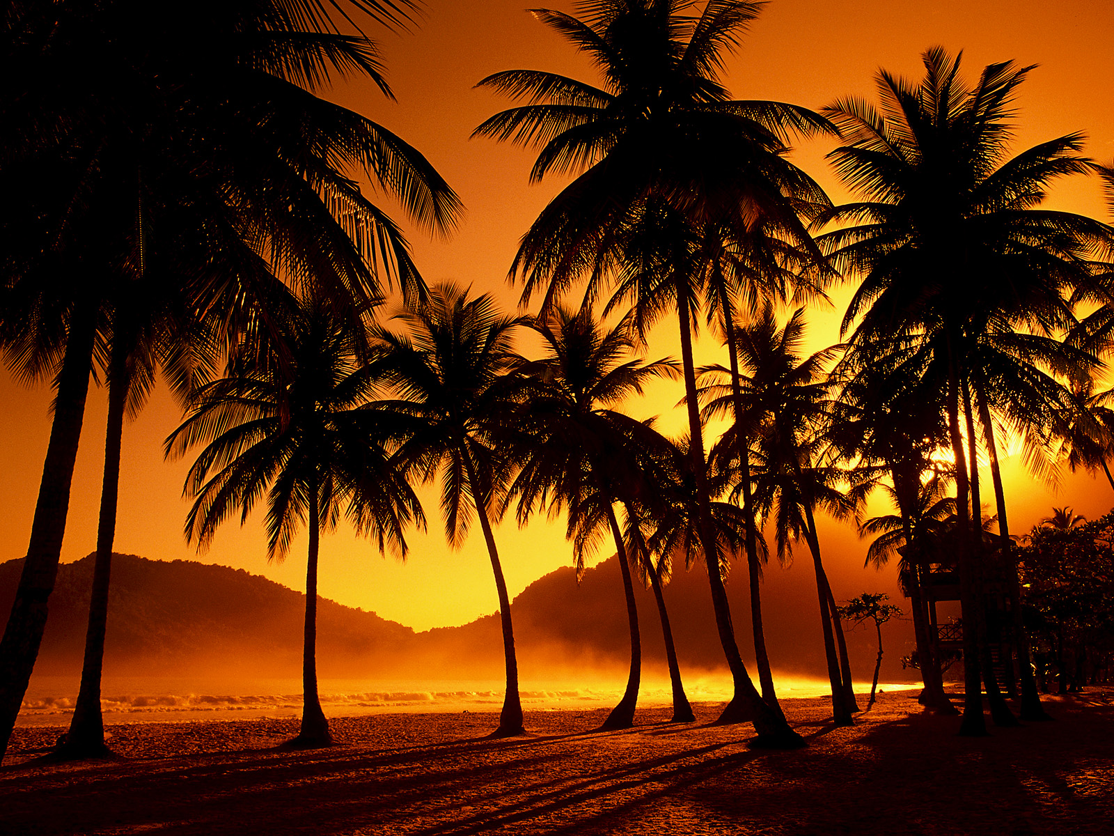 Beach Sunset Palm Tree Tumblr Hd Desktop 10 HD Wallpapers