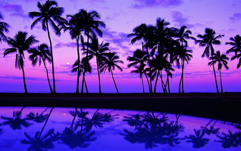 Palm Tree in Purple Landscape Wallpaper