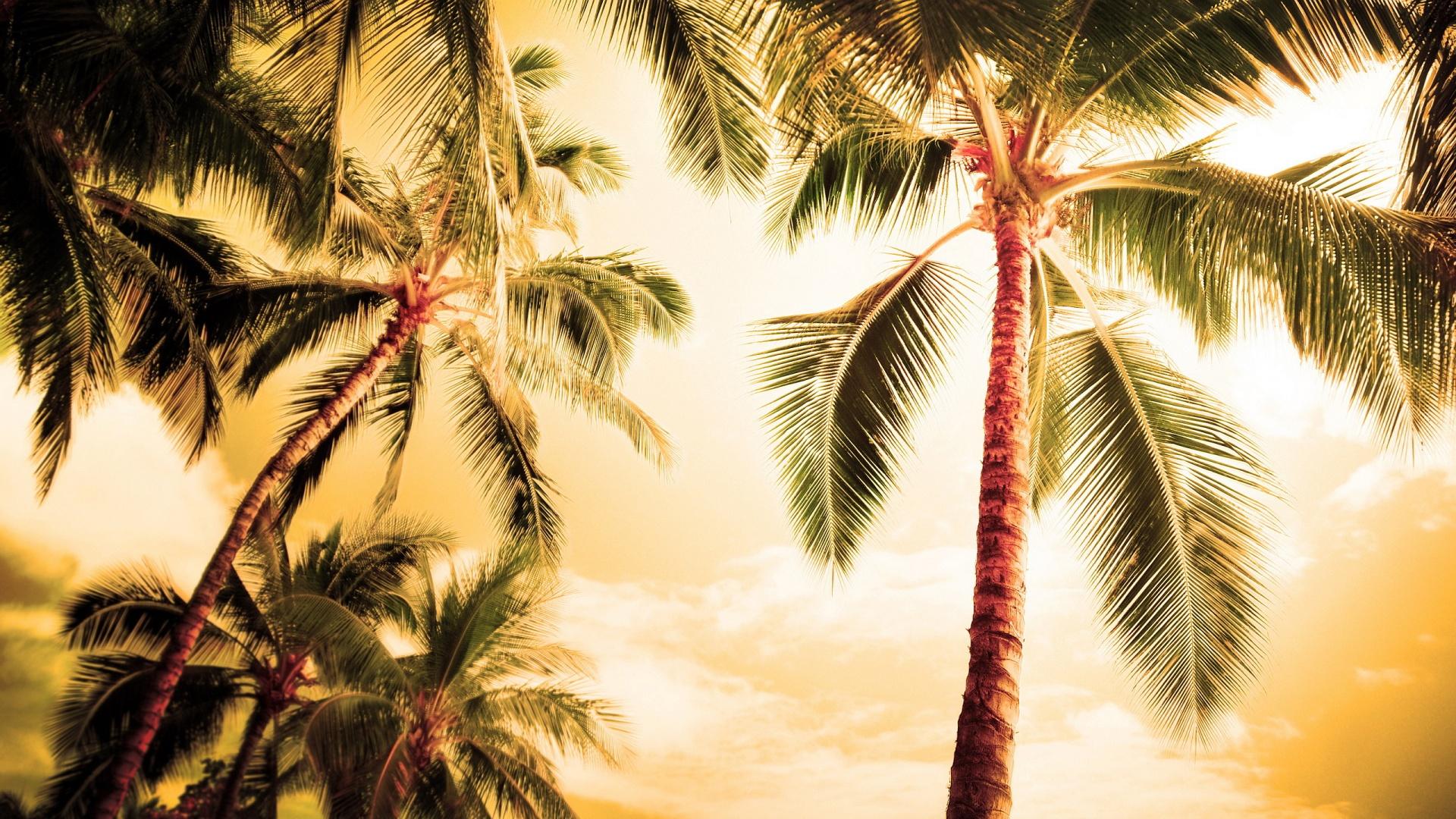 Palm Tree Wallpaper