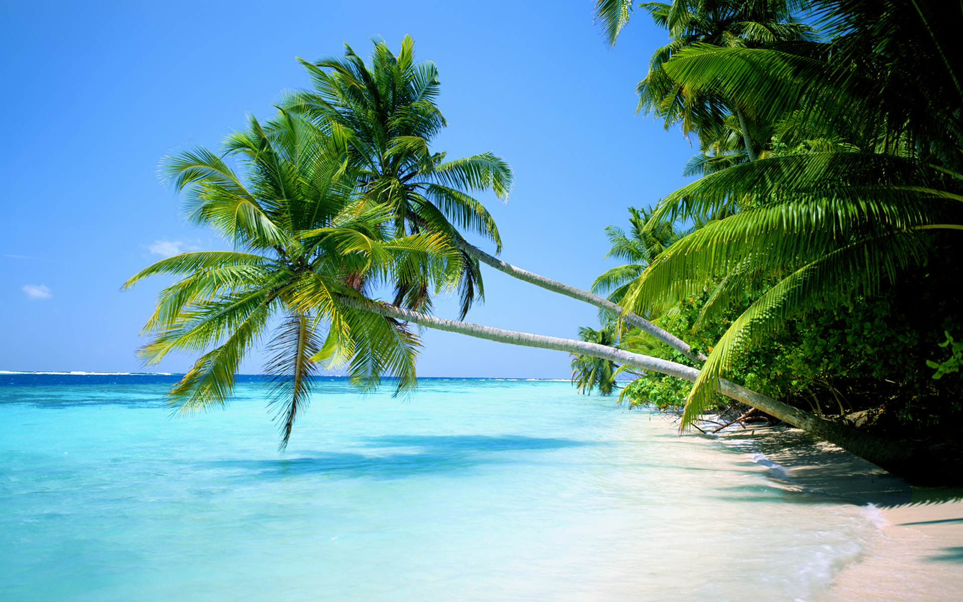 Palm Trees On The Beach: Palm Trees Beach Wallpaper