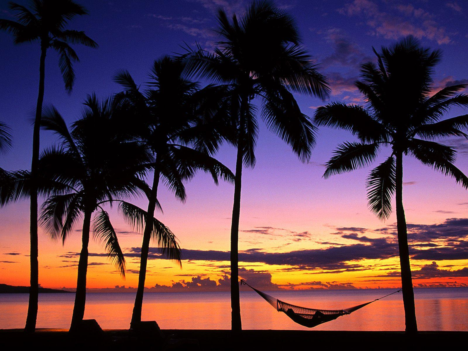 Beach Sunsets With Palm Trees 35888 Hd Wallpapers