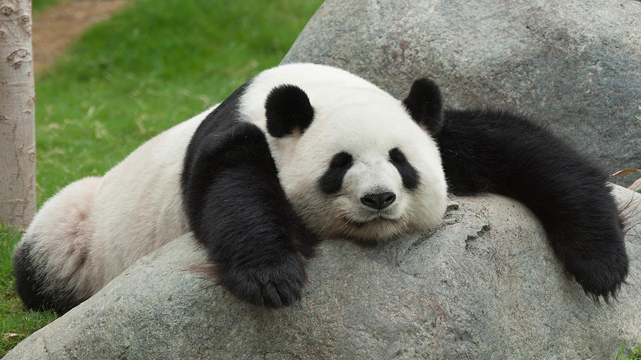 Amanda Miranda Panda is the 2015 Name of the Year