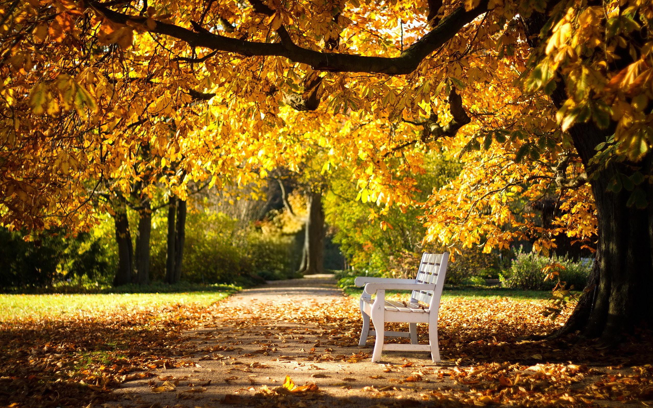 Park Autumn Bench