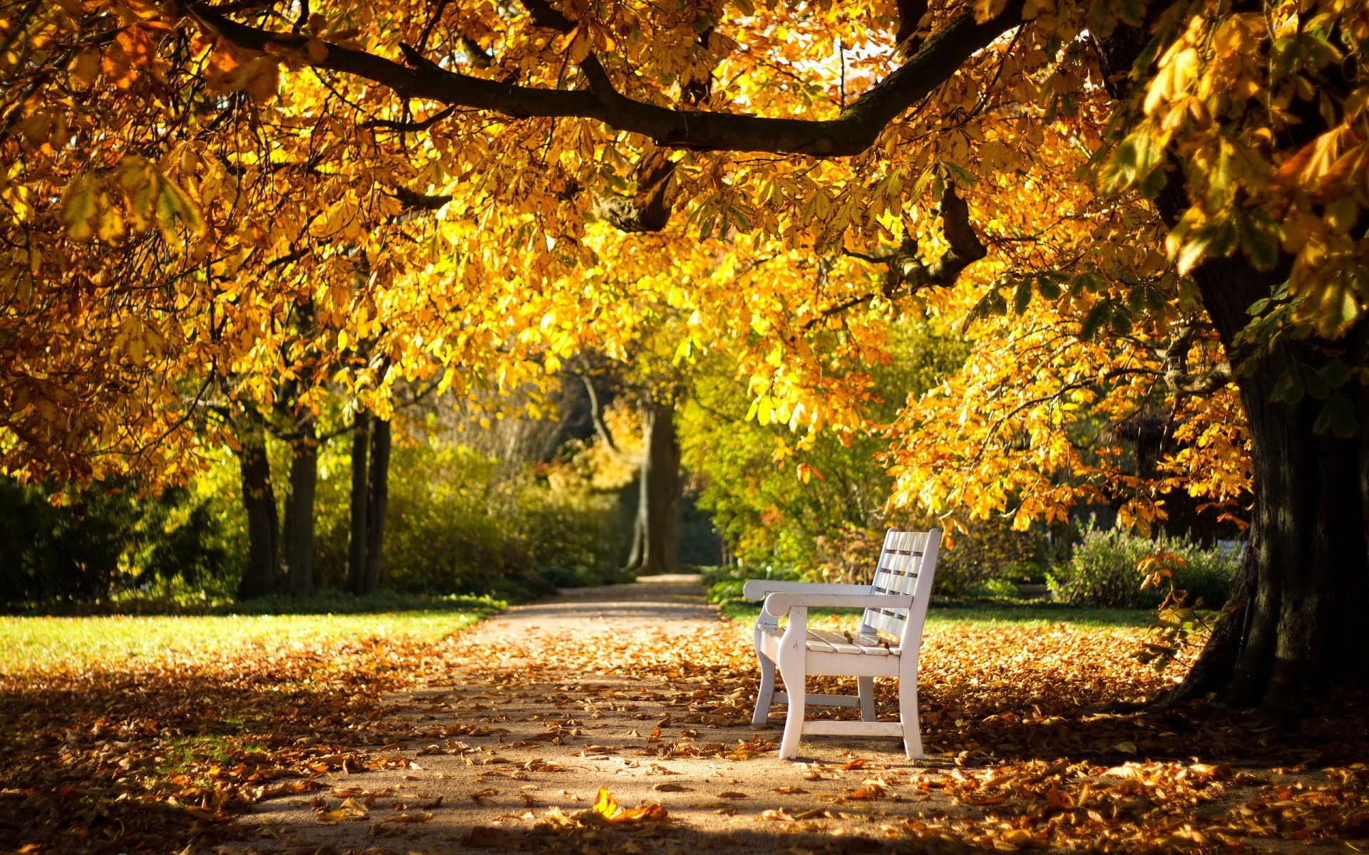 Park Bench Background