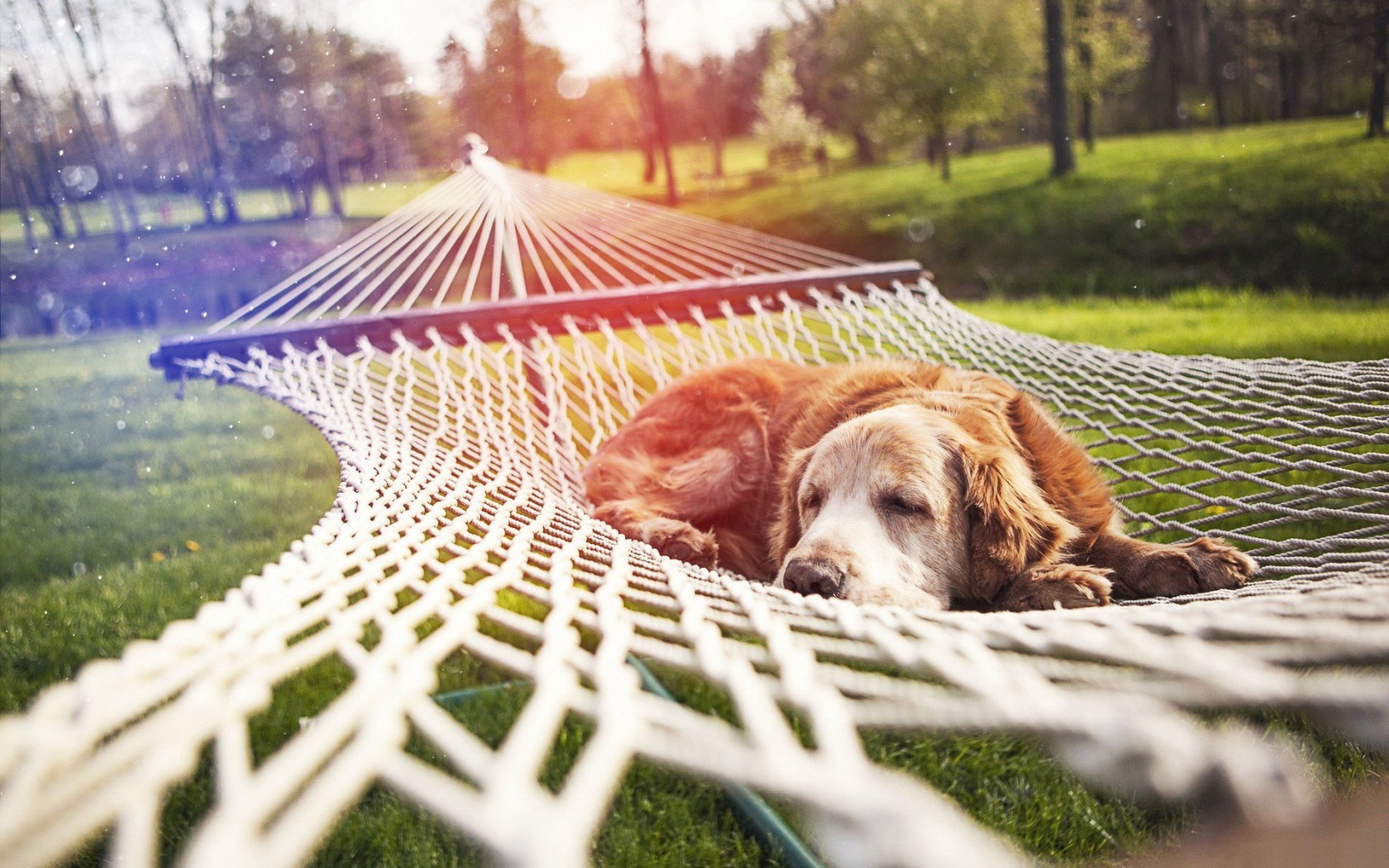 Park Grass Nature Hammock Dog Rest
