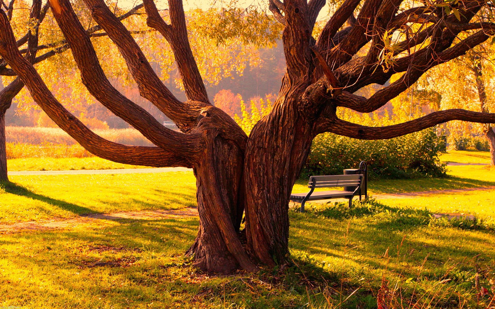 Park old tree