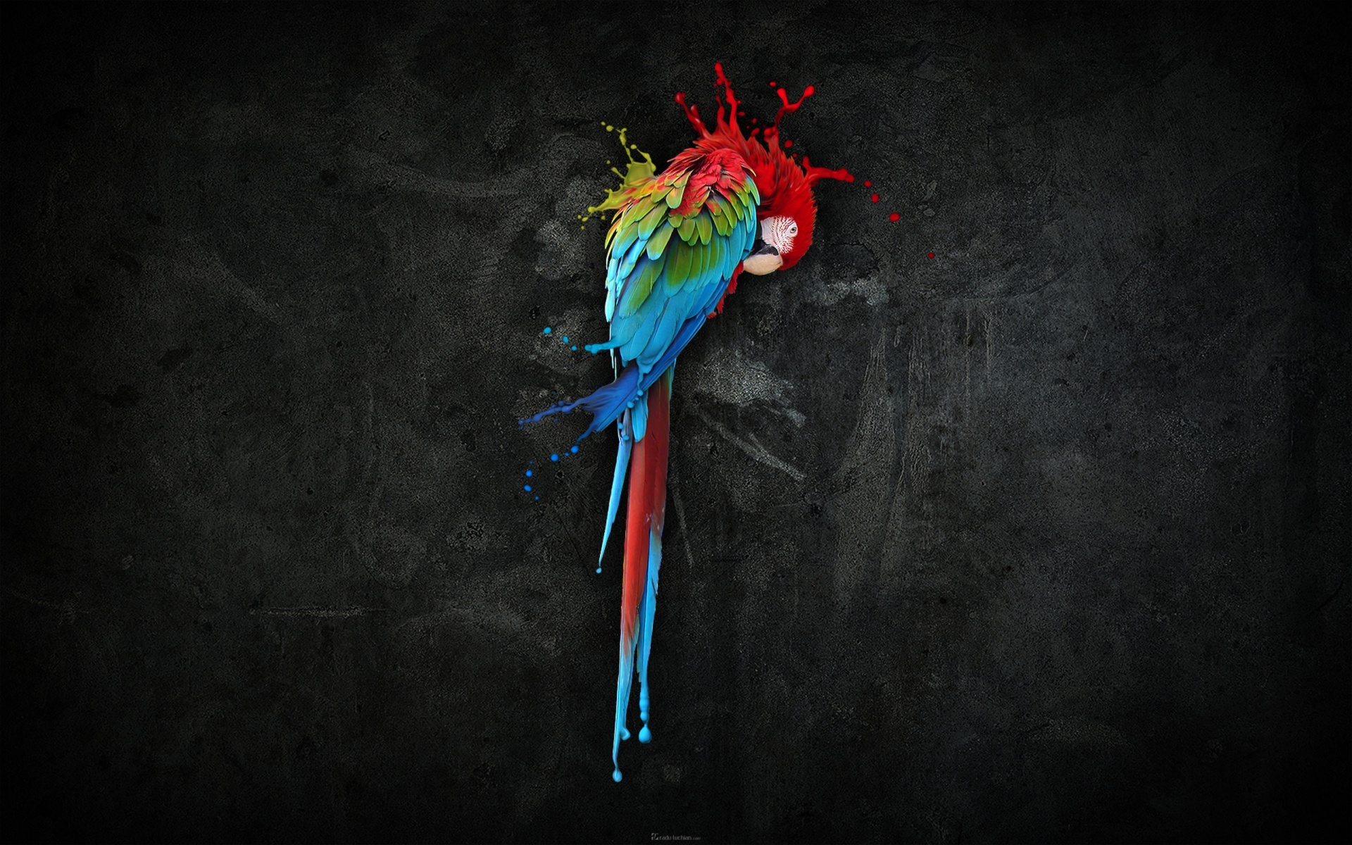 Parrot Splash Art