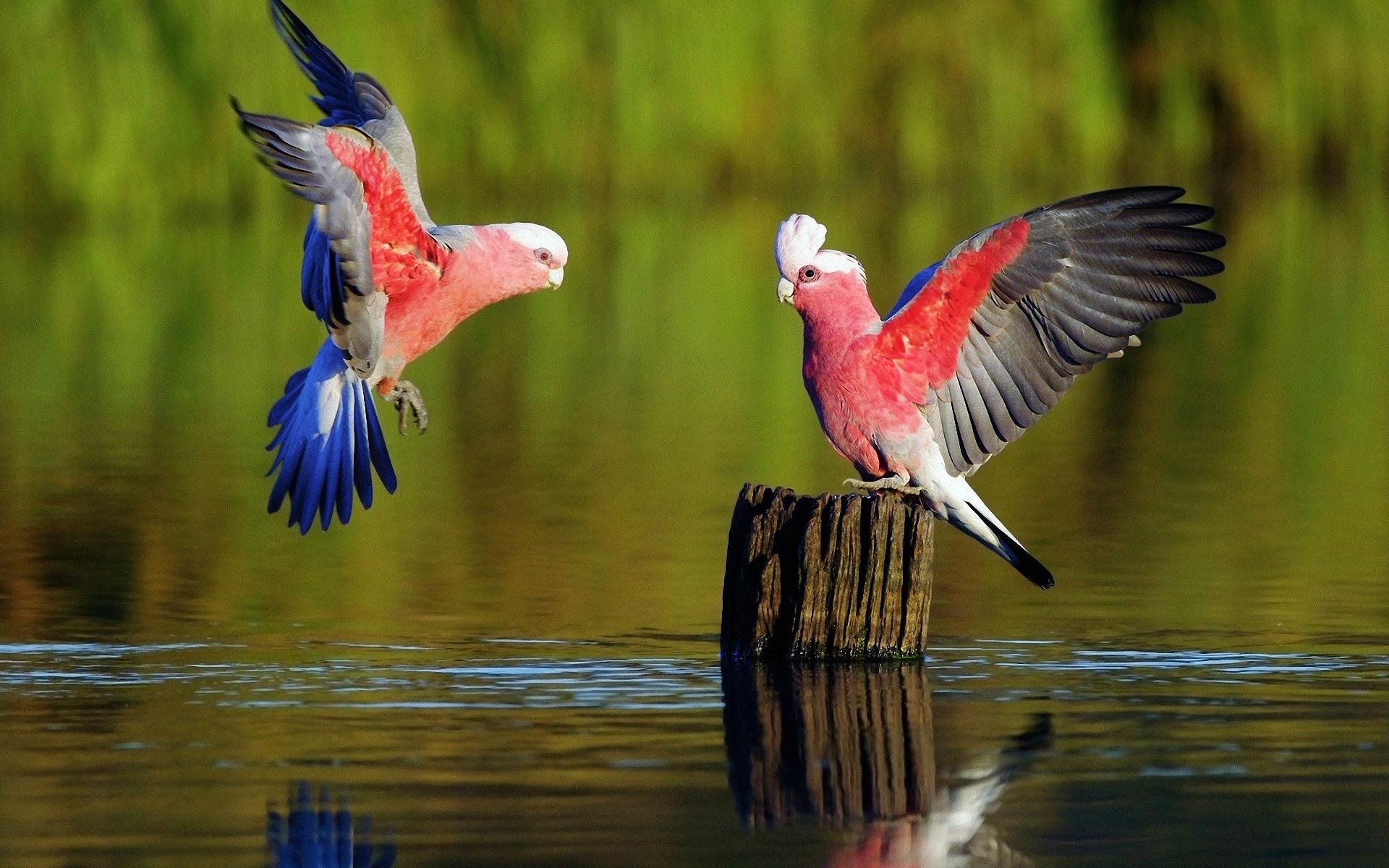 Parrots Images
