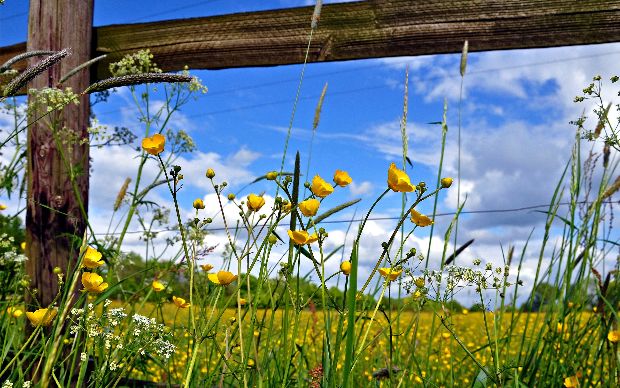 Pasture Fence Flowers