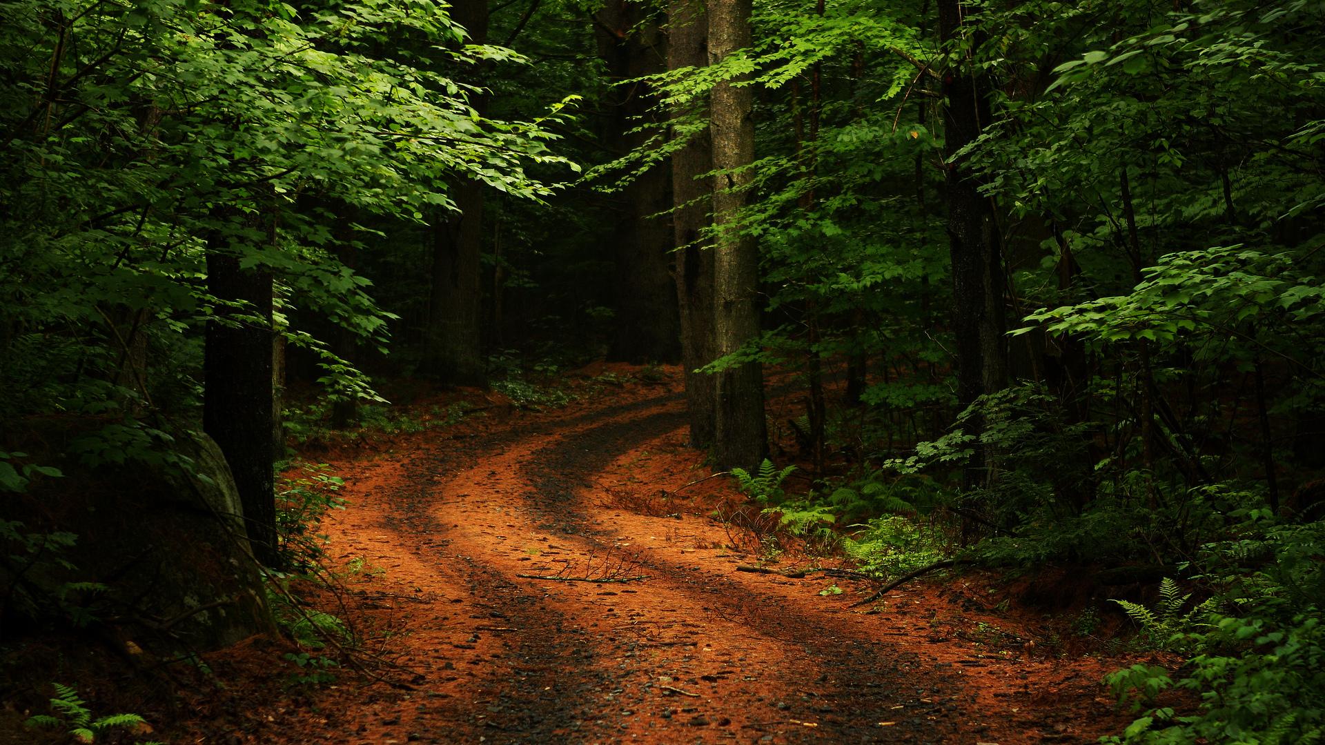 Brown path