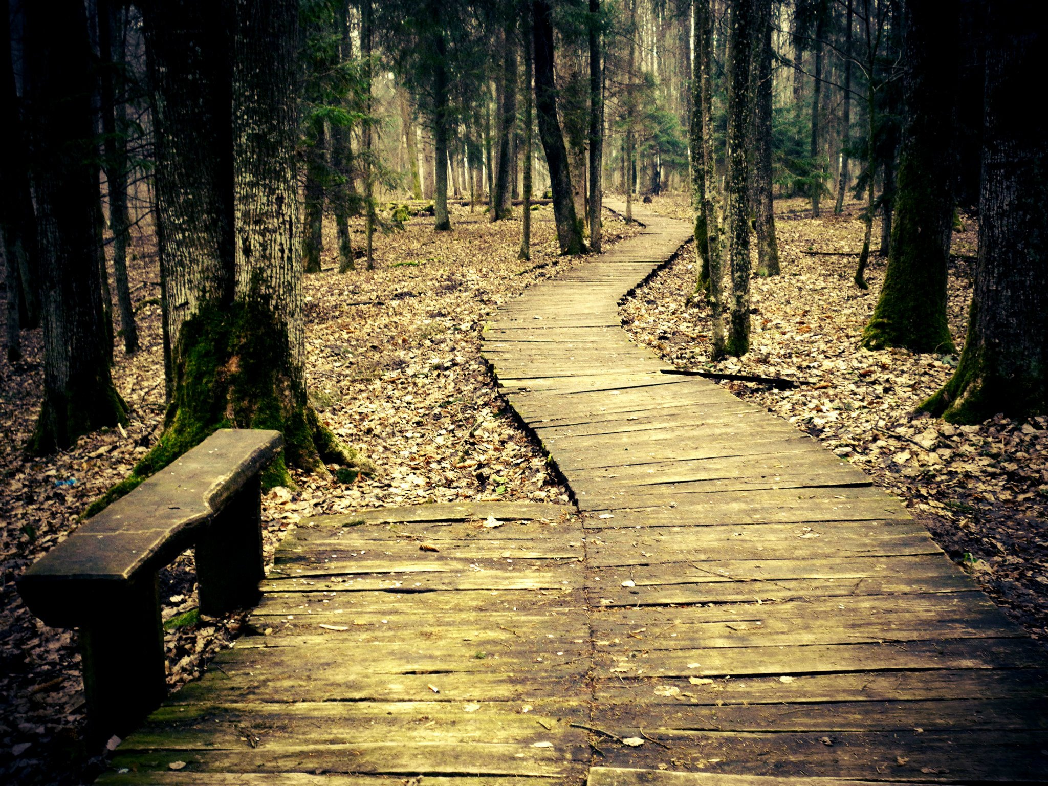 most beautiful forest path wallpaper