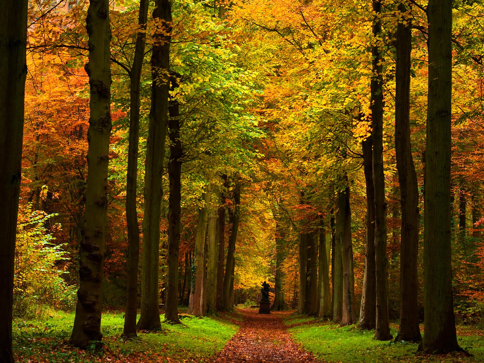 Autumn Path wallpaper .