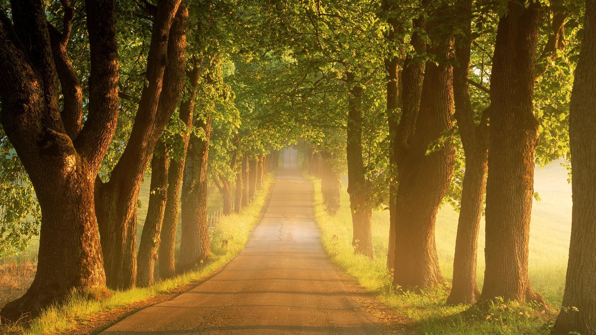 Gorgeous Path Wallpaper 13079