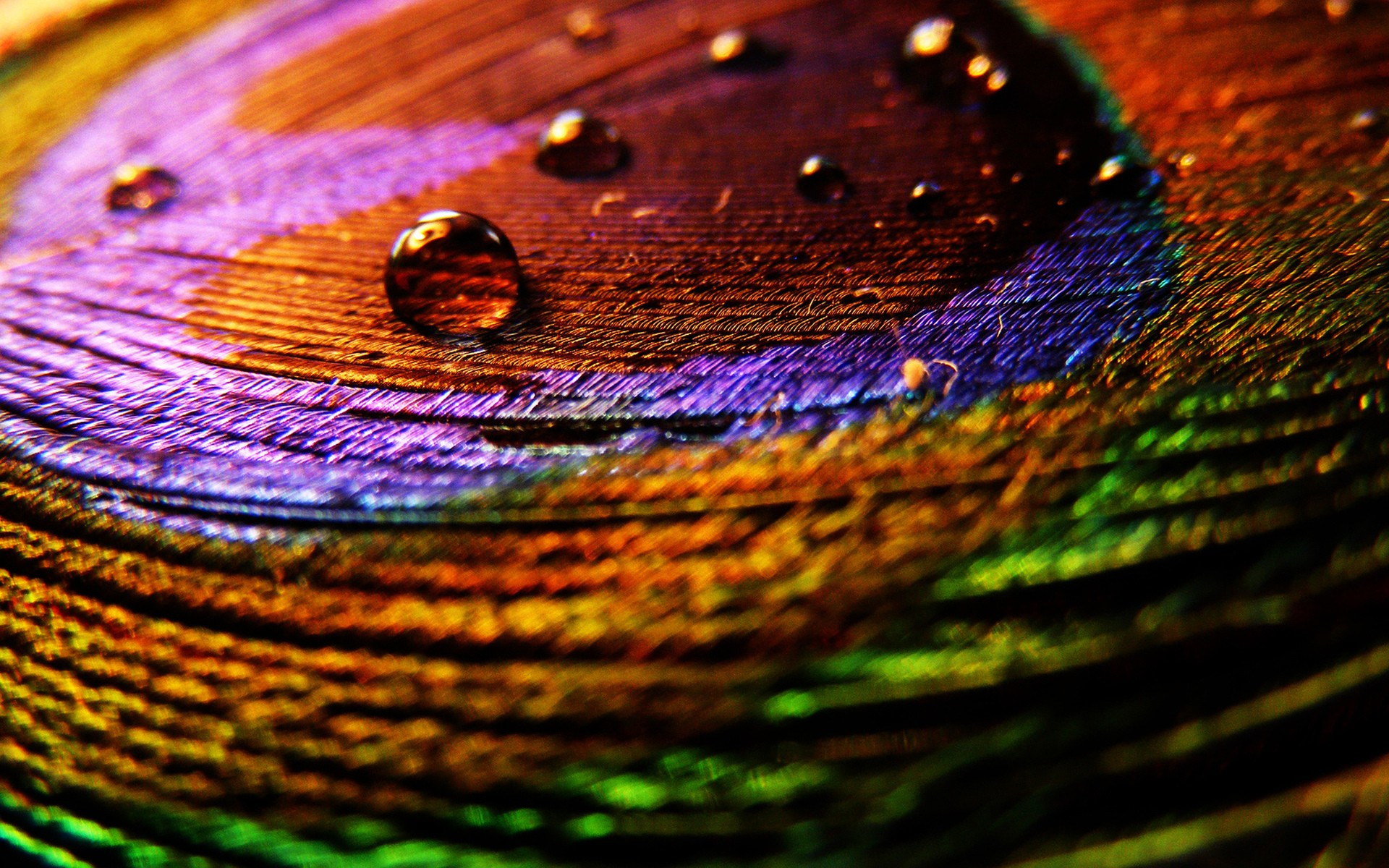 View: Peacock Feathers Macro wallpapers and stock photos