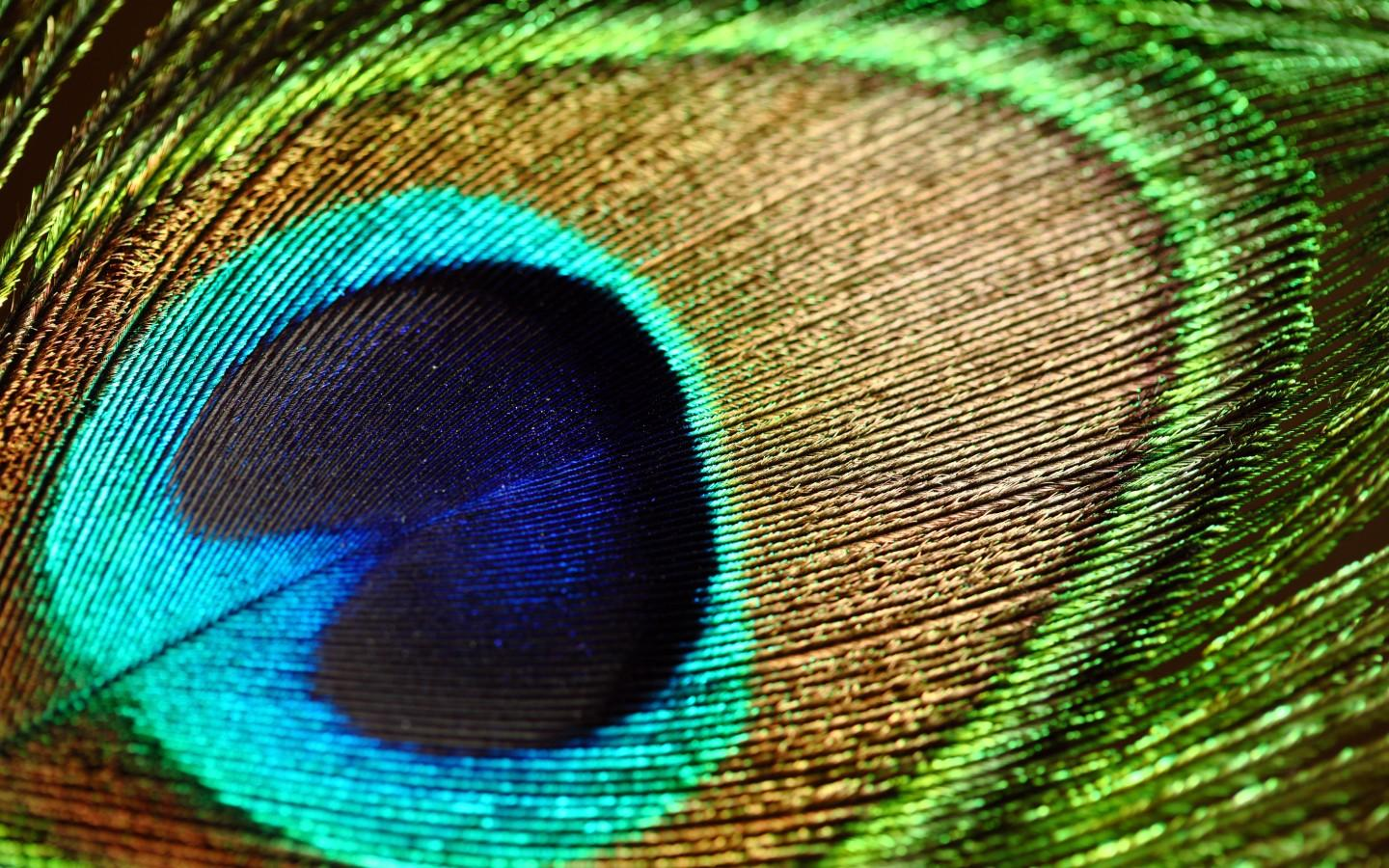 Peacock feather HQ Wallpaper