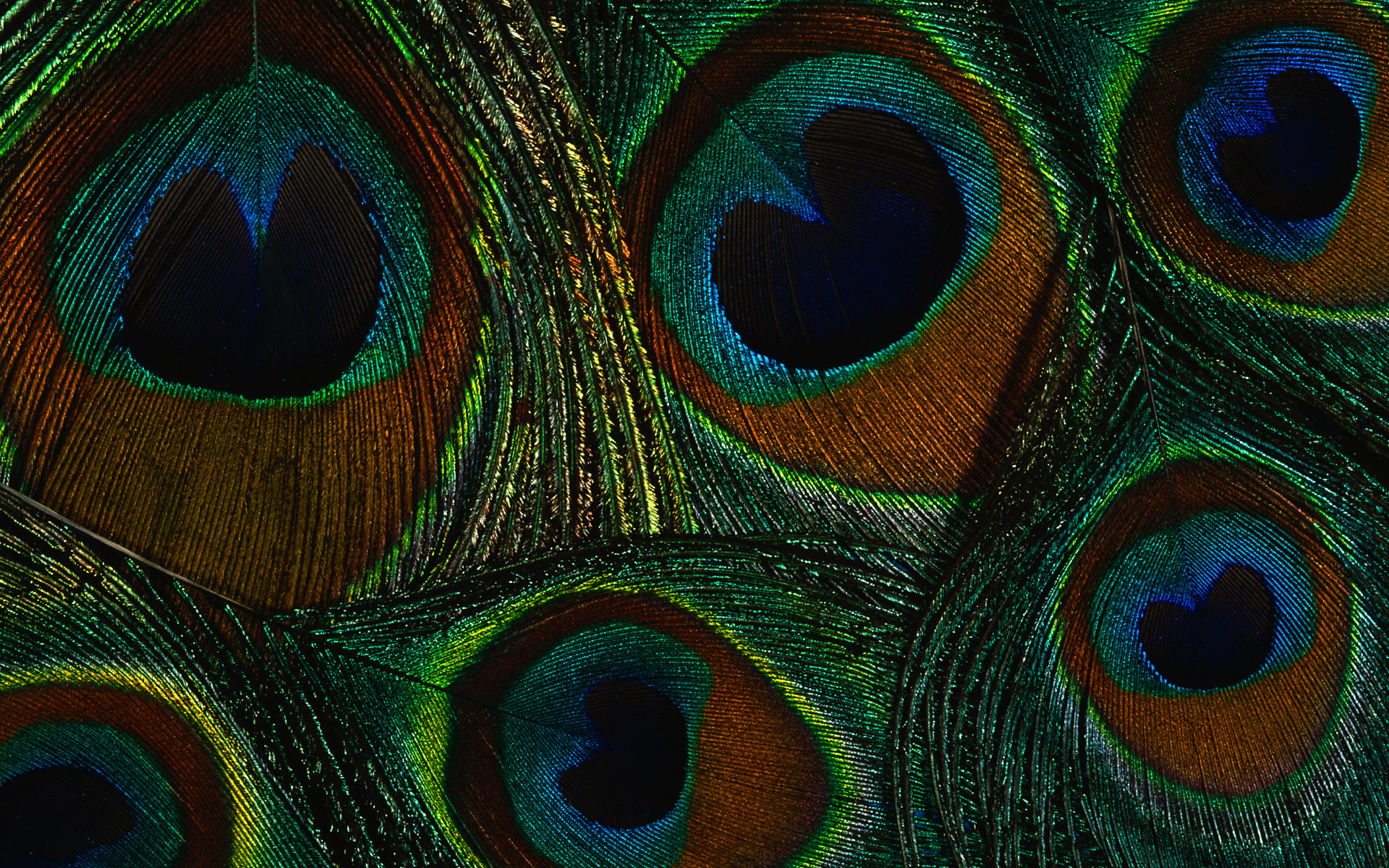 Peacock Feather Wallpaper ...
