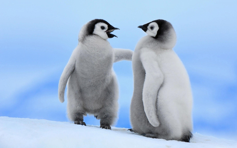 Penguin- Photo#02