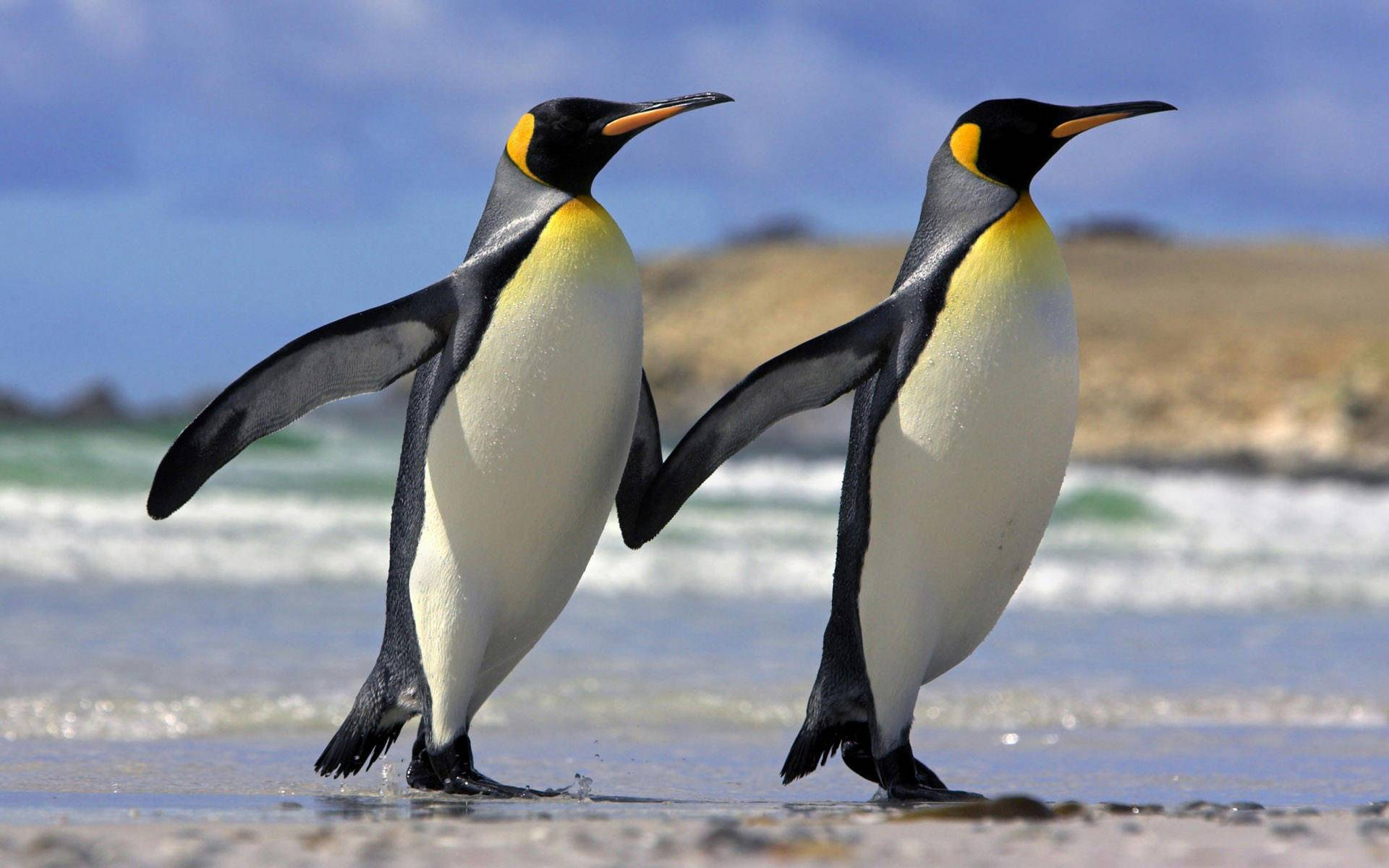 What Google's Latest Penguin 3.0 Update Means To You