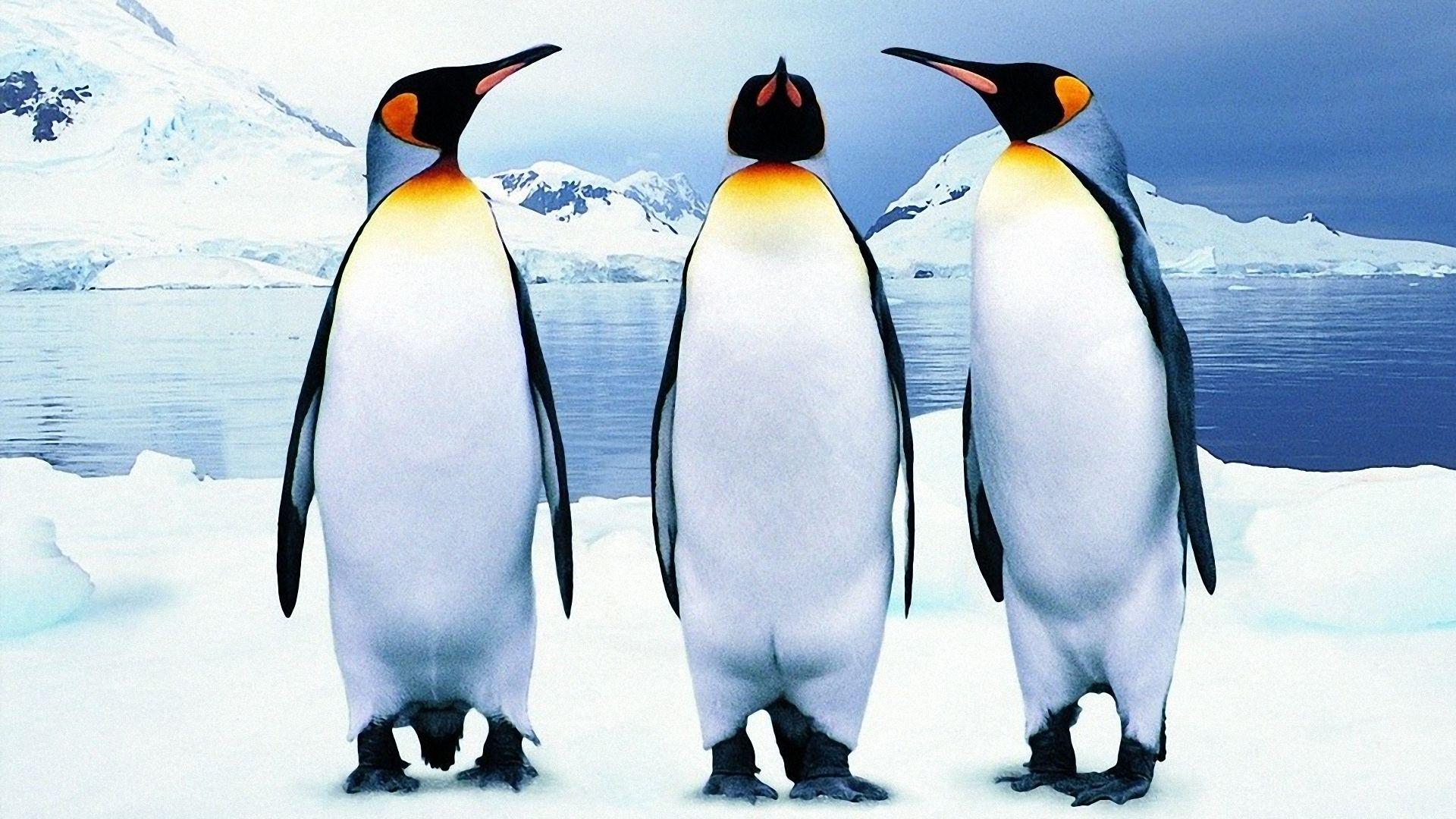 Penguin 2.1 Update is Live