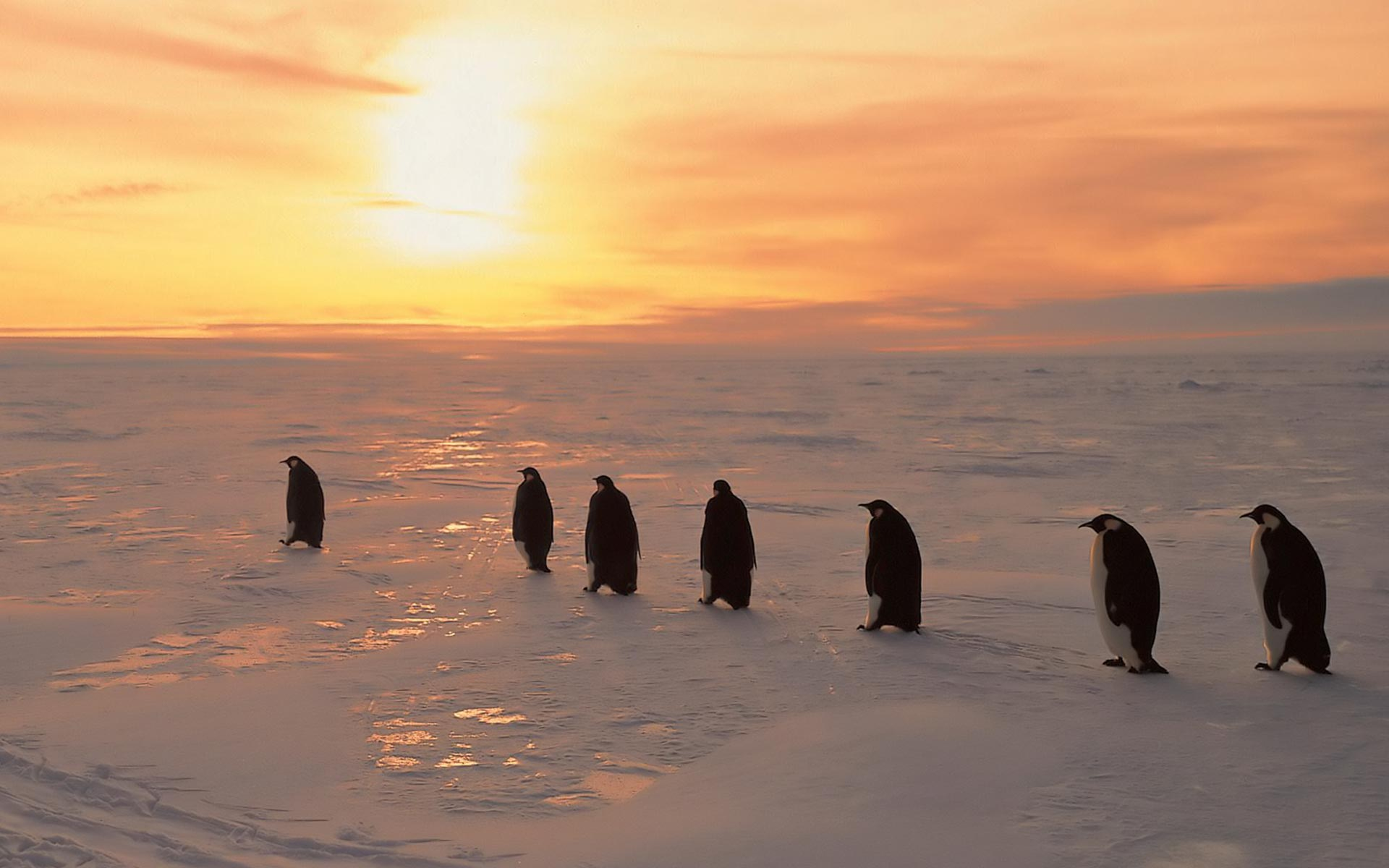 Penguins Sunset