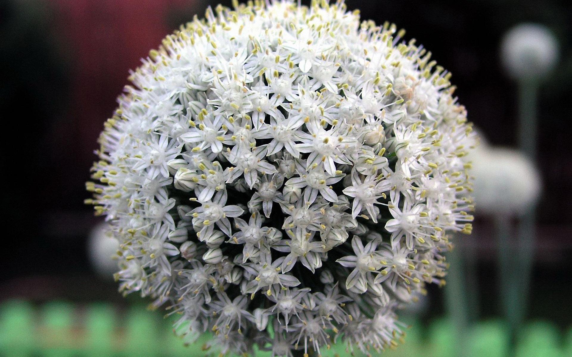 Perennial Flowers 14079 1920x1200 px