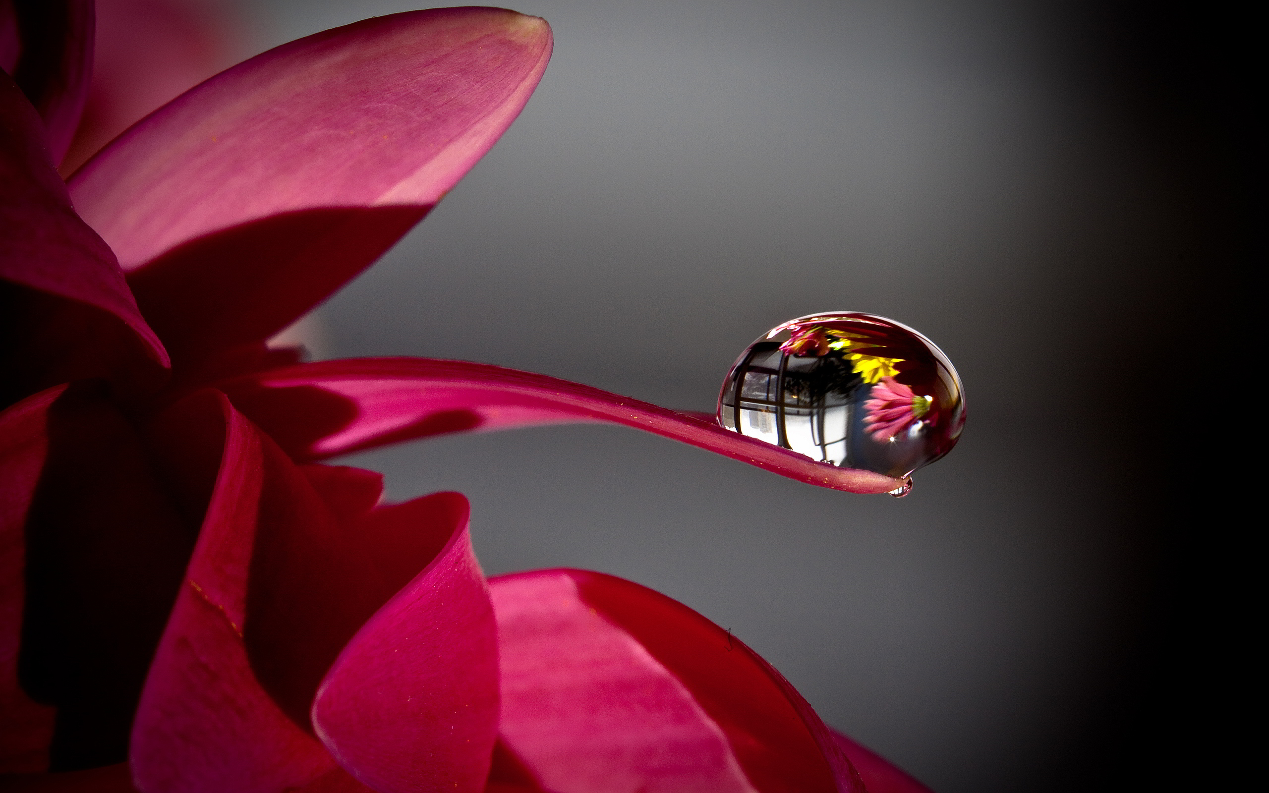 Water Drop On Flower Petal