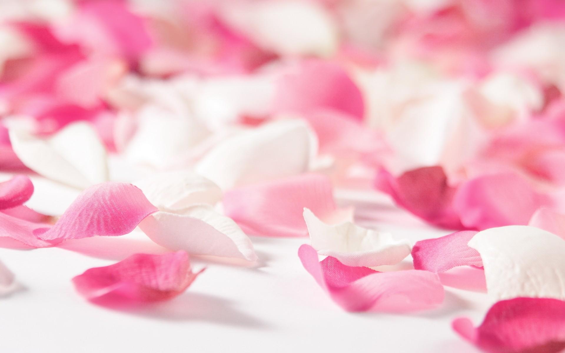 Wonderful Flower Petals Wallpaper 22894