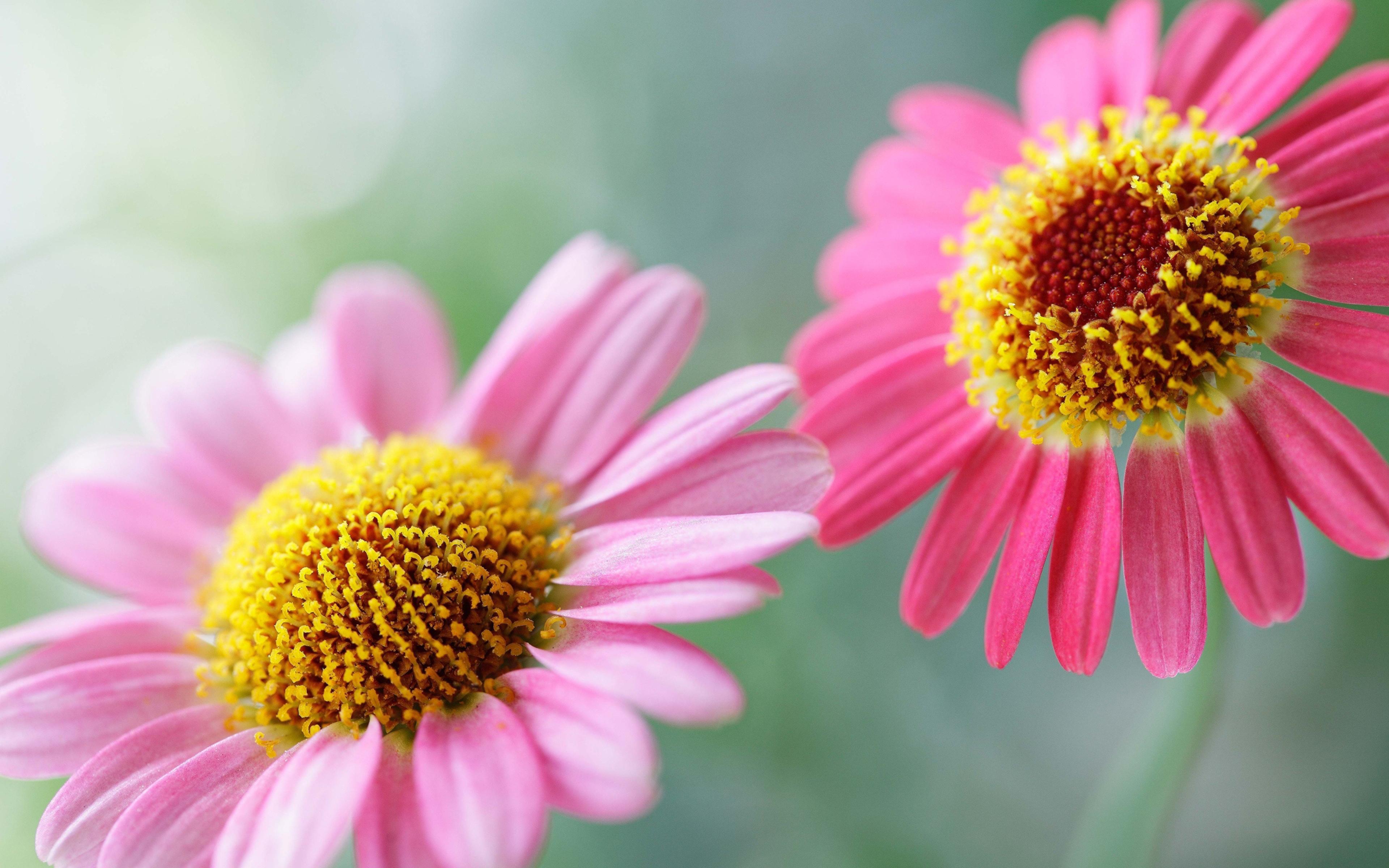 3840x2400 Wallpaper flowers, pollen, petals, two