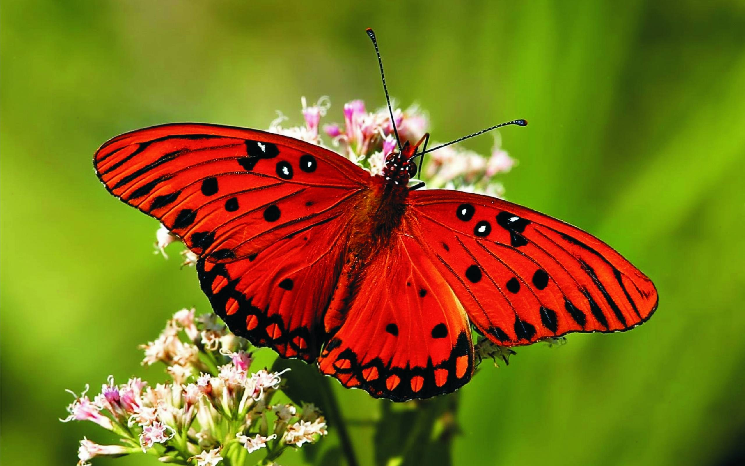 For humans seeing butterflies fluttering around with their beautiful brightly colored wings is a joyful sight. However not for their natural predators like ...