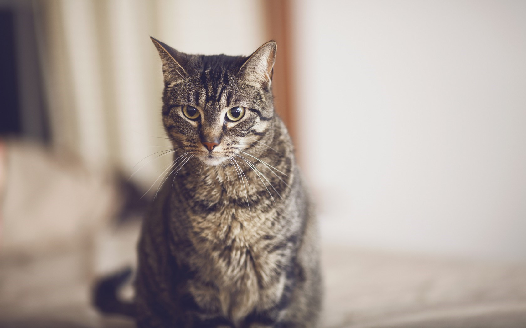Photography Cat