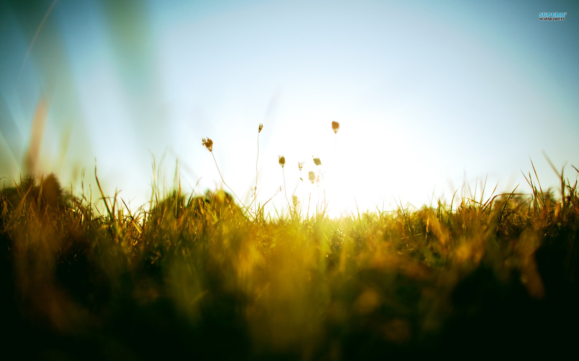 Excellent Green Grass for Sunset Moment Romantic Under Blue Sky Photography Wallpaper