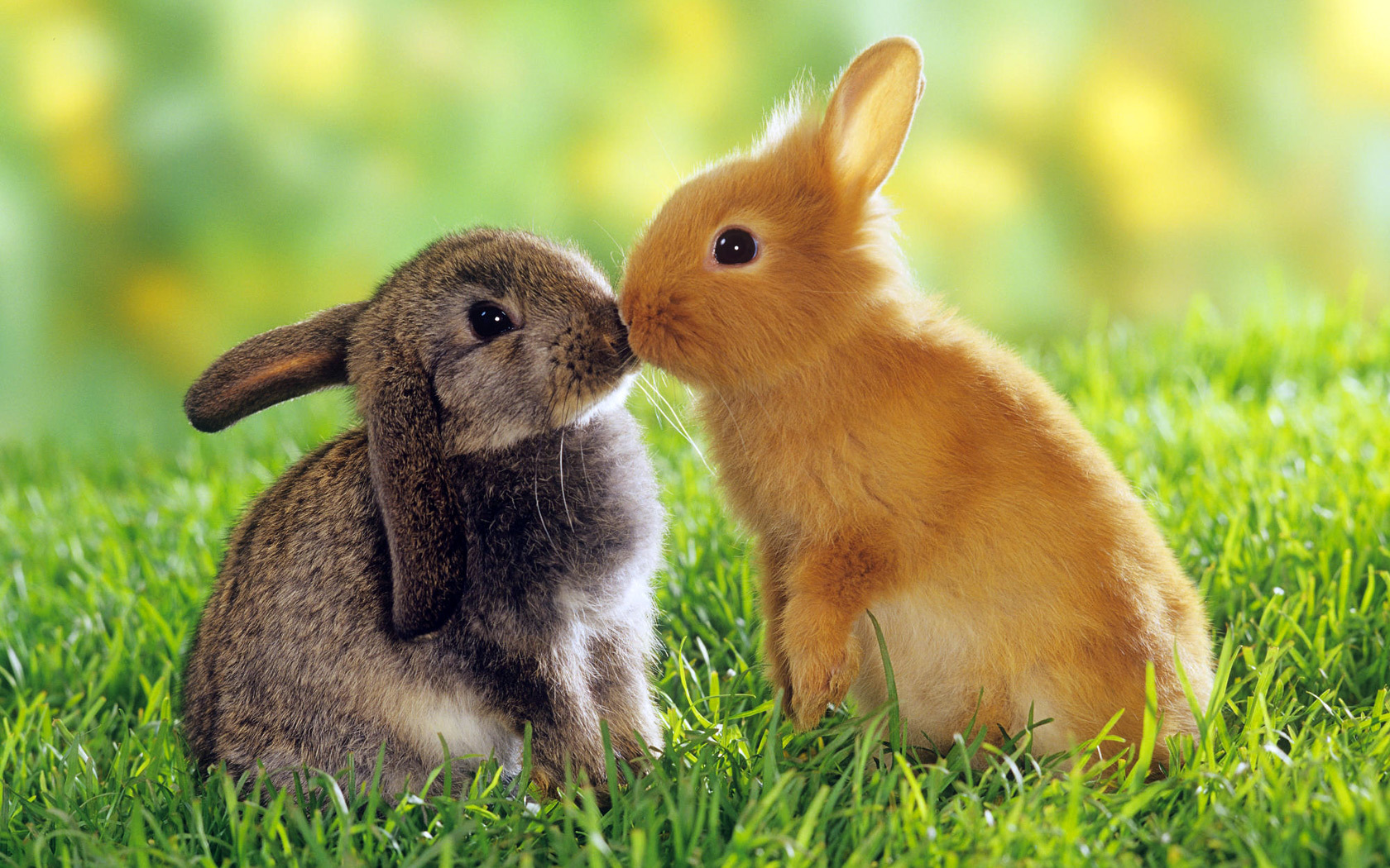 """Happy rabbits practice a cute behavior known as a """"binky"""". They jump up in the air, twist and spin around!"""