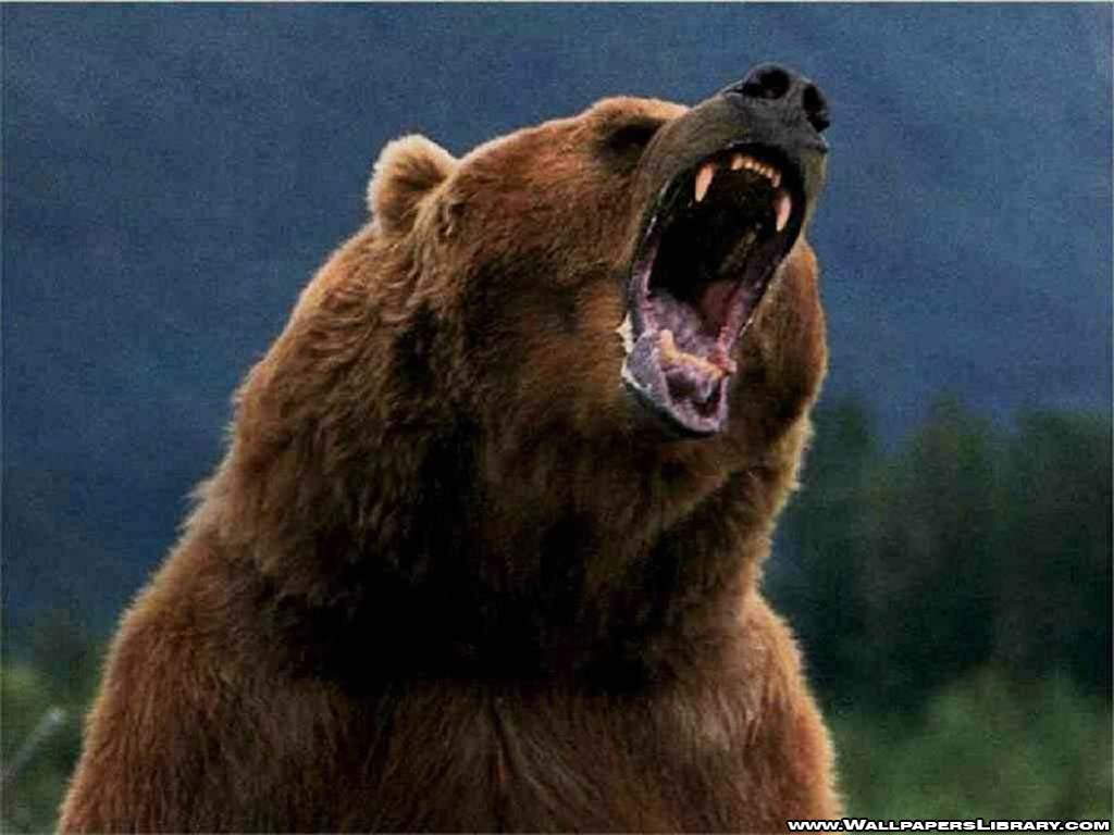 Grizzly-bear- Photo#01