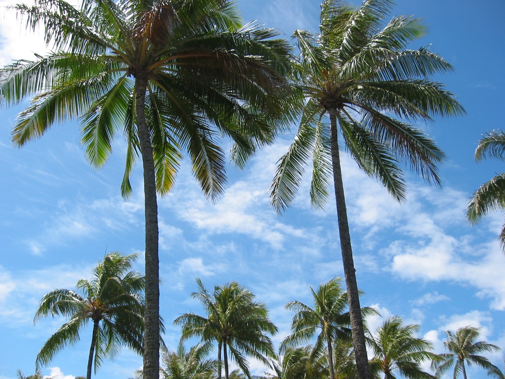 Pictures Of Palm Trees