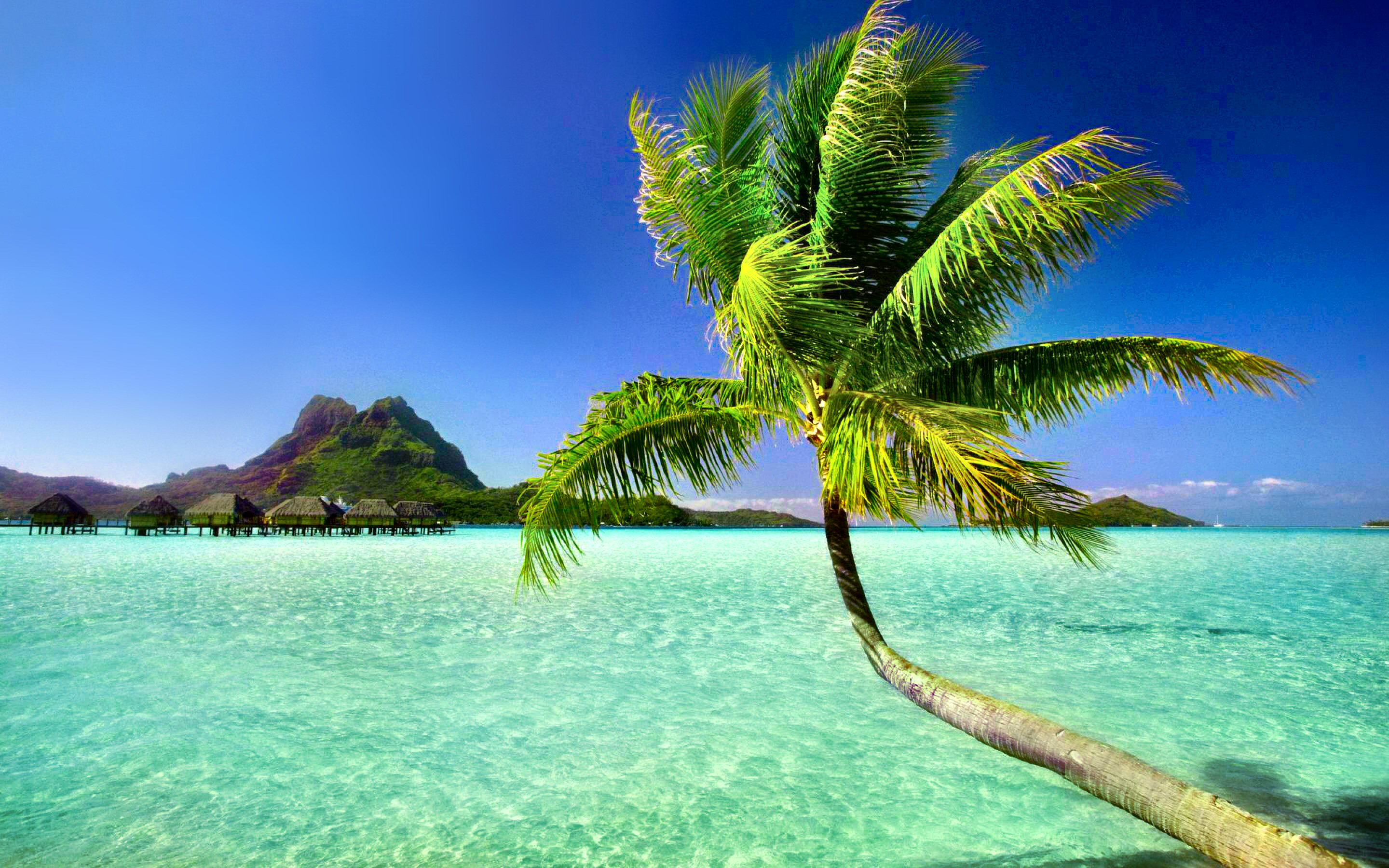 Paradise Beach Wallpaper 1366x768 Palm Trees 25 HD Screensavers