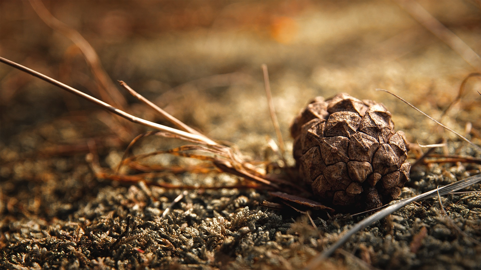 "Download the following Excellent Pinecone Wallpaper 2832 by clicking the button positioned underneath the ""Download Wallpaper"" section."