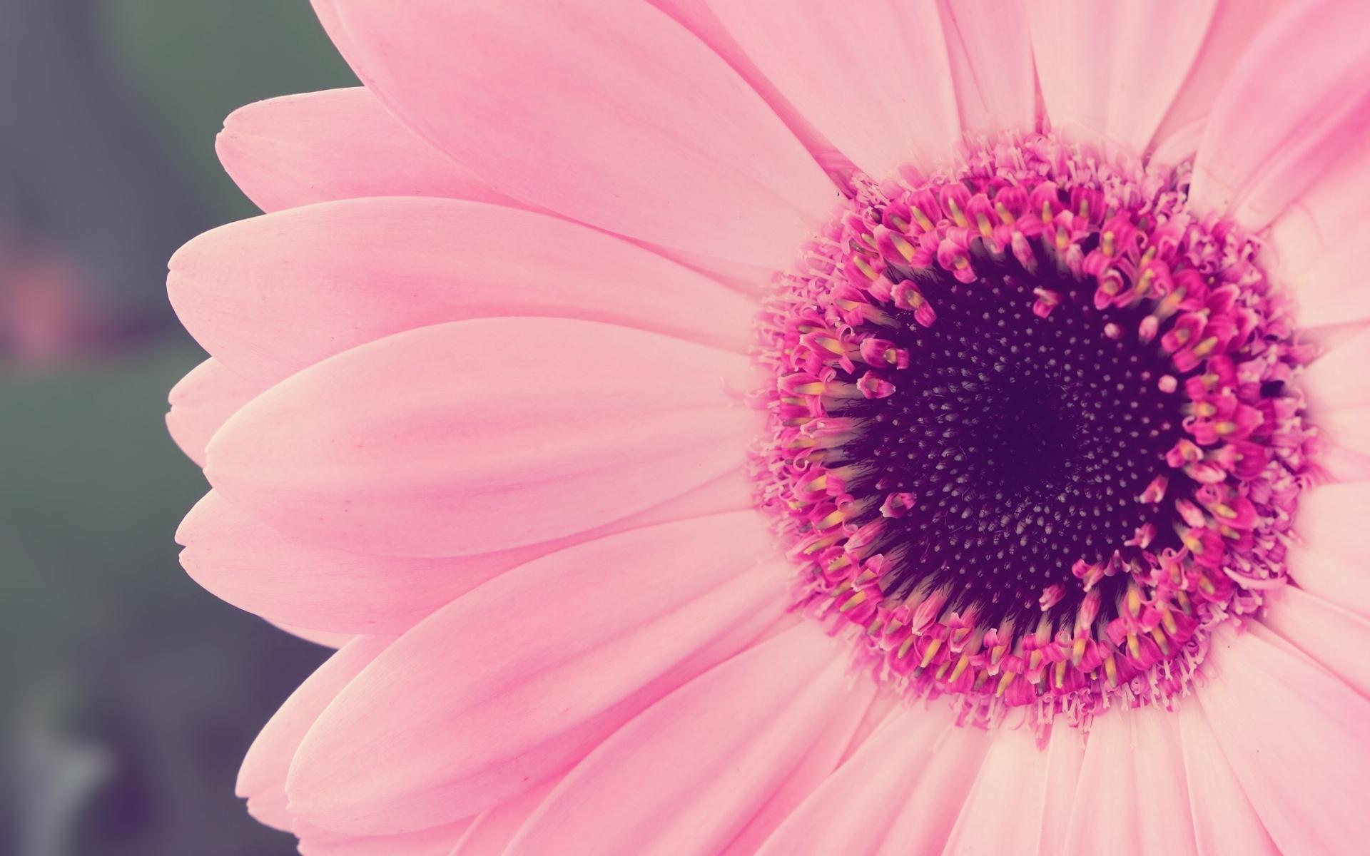 ... pink flower 11 ...