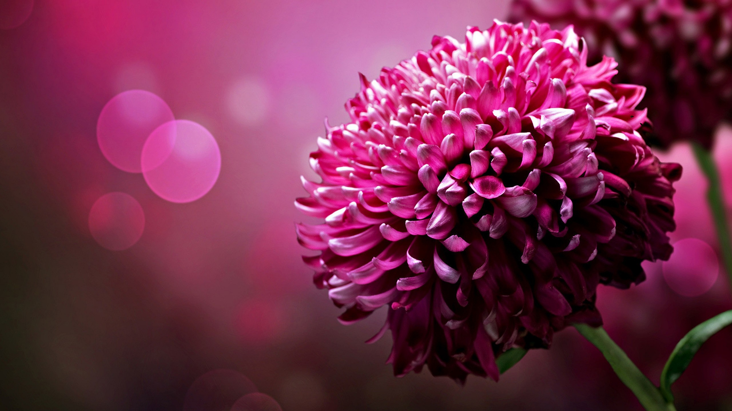 Beautiful Pink Flower Wallpaper #4859 Full HD 2560x2560 Resolution ... | Pink Flowers | Pinterest