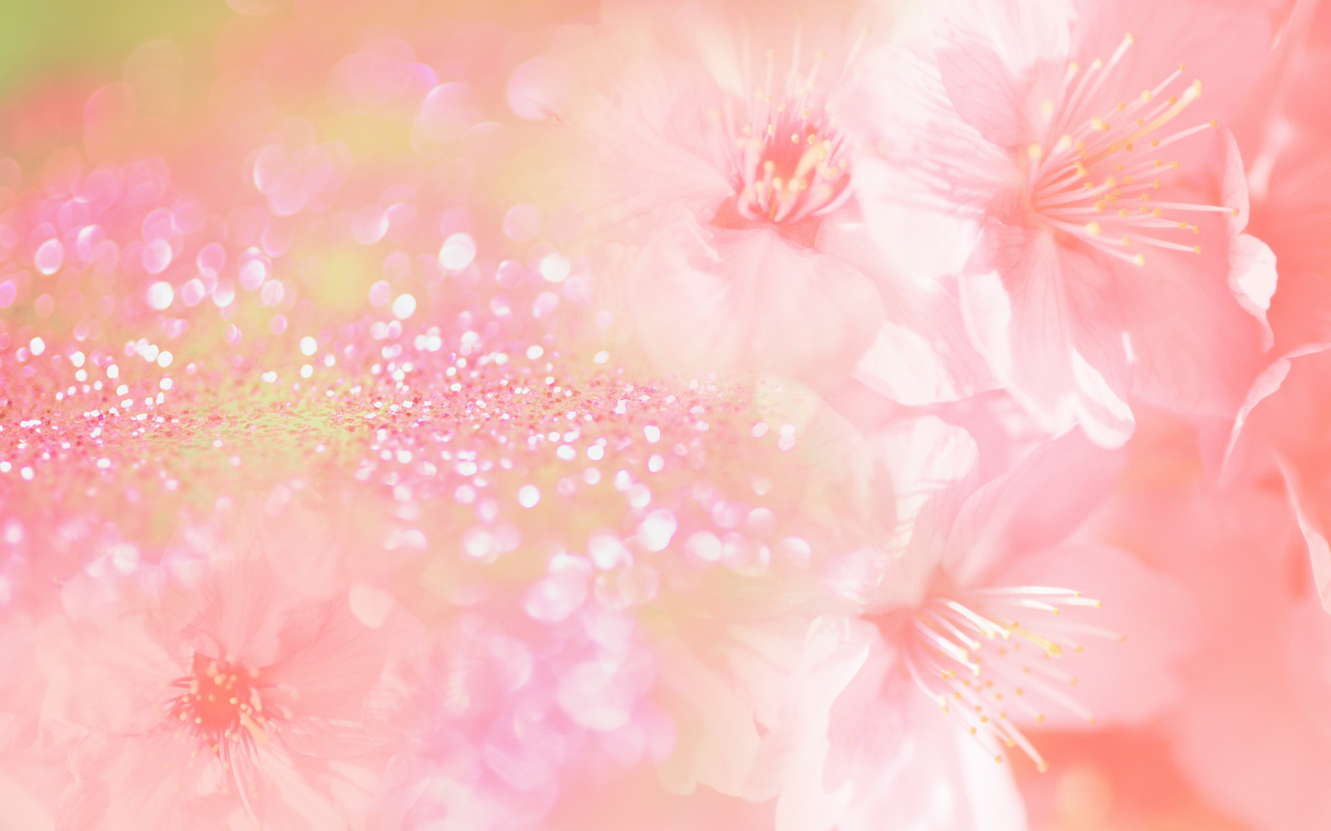Pink Flowers Background 10288